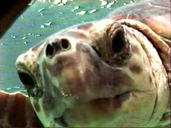 Turtle05